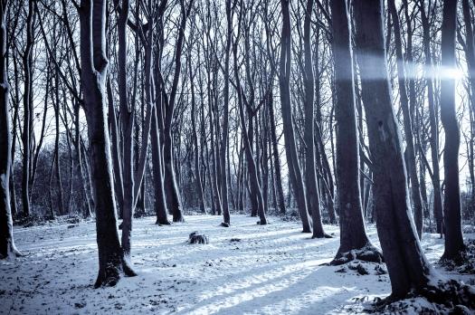 Narnia_PeaceNotPas